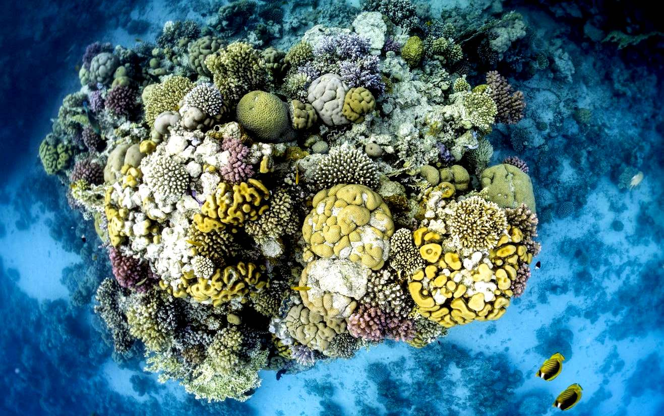 Coral reefs under threat from climate change